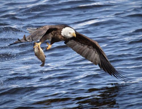 FALL/WINTER – Eagle Watching Retreat